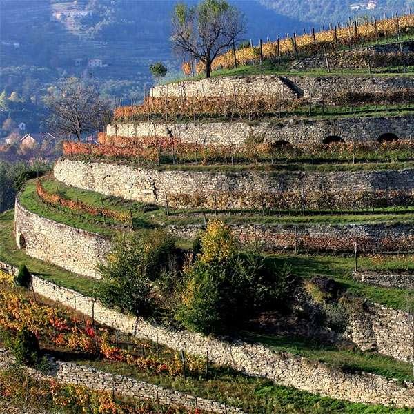 I terrazzamenti (Fasce) -